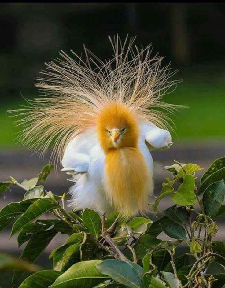 расскажем самые смешные птицы мира фото клиника май позаботится