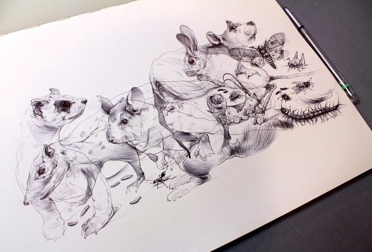 Bugs and rodents. #bugs #rodents #drawing #sketch #ballpointpen #moleskine