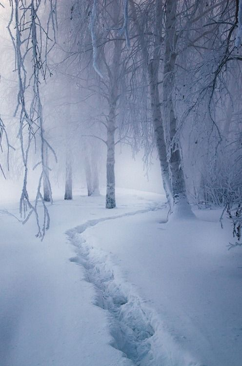 a walk in freshly fallen snow   Here's a trail we aren't going to follow today my friend. How about something hot to drink?