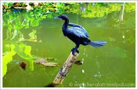 Image result for kerala birds