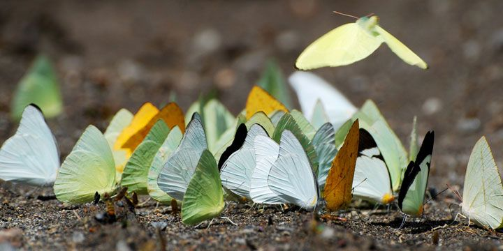 nature-animaux-papillon-tortue-larme4