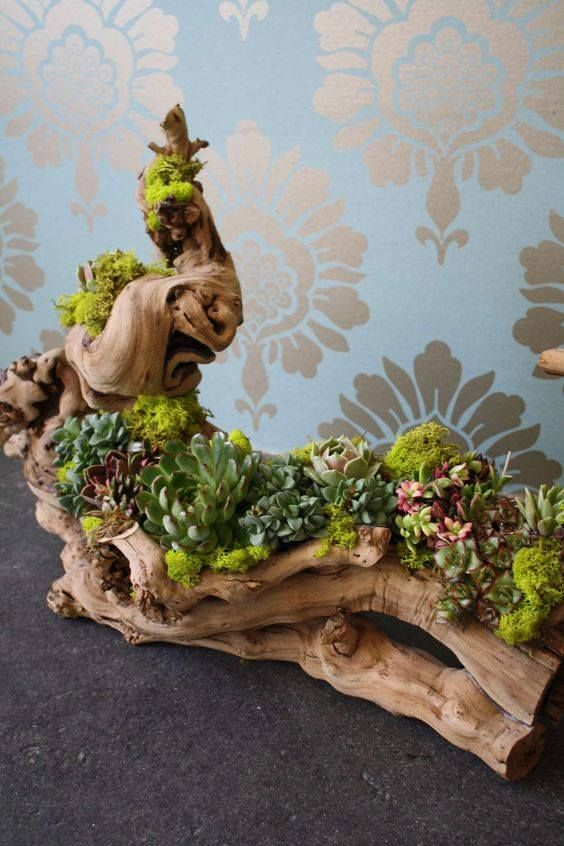 Succulents planted in wood/fake wood.