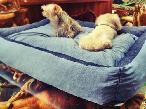 80 X 110 cm Köpek Yatağı Köpek Minderi BLUE DOG BED - KÖPEK YATAKLARI Mavi Köpek Minderi - Köpek Yatağı kemique.com/page.php