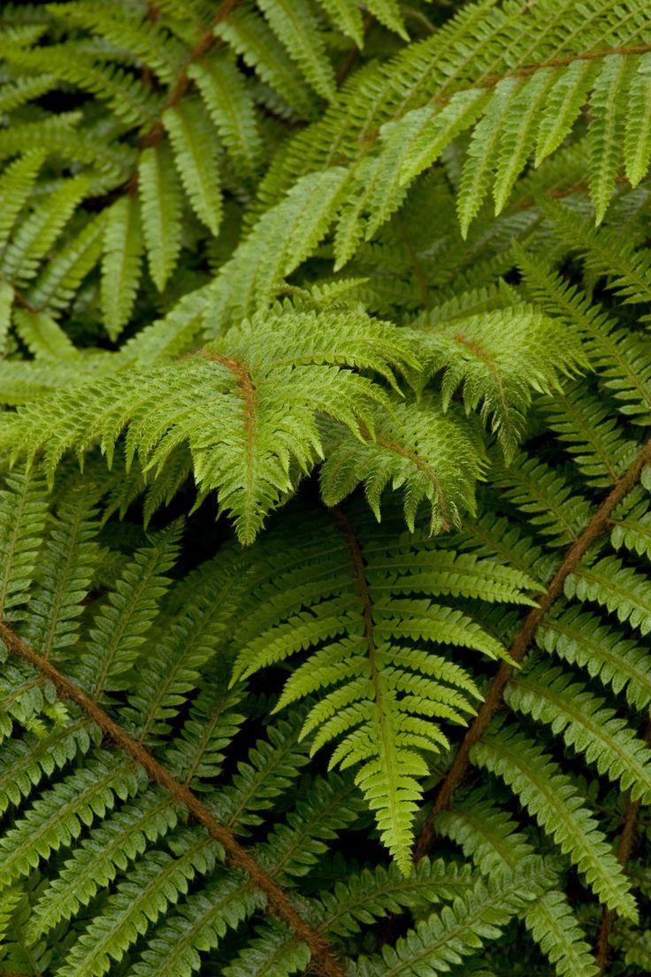 Perennials Tolerant Of Drought Drought Tolerant Edible Landscaping