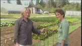 Building Your Own Tomato Plant Cage Using Wire Videos | Home & Garden How to's and ideas | Martha Stewart