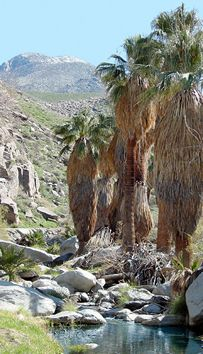 Get up from the pool and hike the Indian Canyon.  If you want to really go off the map, try the West Fork of Palm Canyon Creek.  That's the old trail for locals only.