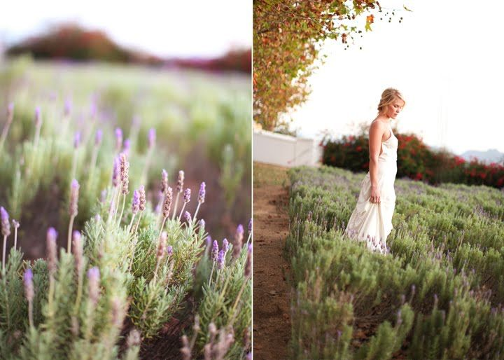 Gabriel and Carin Photography: [Langkloof Rose Farm] Wellington South Africa