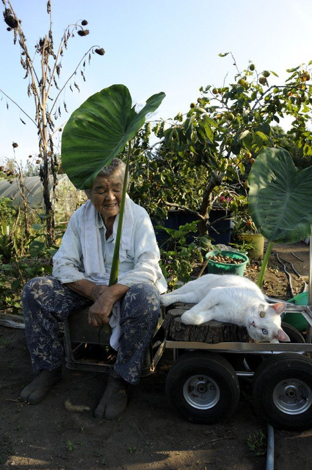 Miyoko Ihara has been taking photographs of her grandmother, Misao and her beloved cat since their relationship began in 2003. Their closeness has been captured through a series of lovely photographs. 2-20-13 / Miyoko Ihara