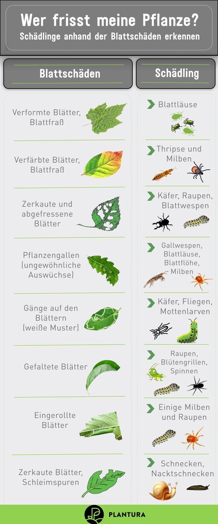 Wer Frisst Meine Pflanze Schadlinge Anhand Der Blattschaden Erkennen Was Ihr Garden Deco Potted Plants Patio Ideas Potted Plants Patio Plant Pests