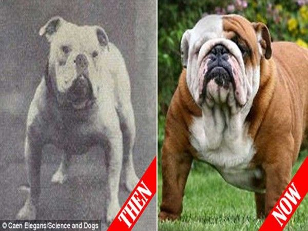 Bir asır içinde köpeklerin uğradıkları değişimi görmeye hazır olun. Galeri ve detaylar ajanimo.com'da.. #ajanimo #ajanbrian #dog #hayvan #animals #animal