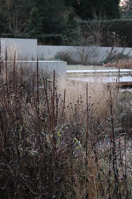 Wilson McWilliam Chorleywood Garden211   Flickr   Photo Sharing! Landscape  ArchitectsWinter ...