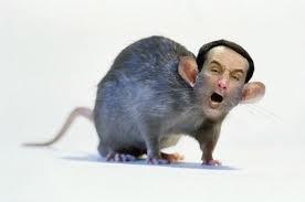 Coach K looks like a rat