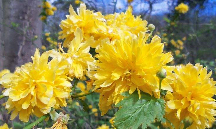 Yellow flowers - spring