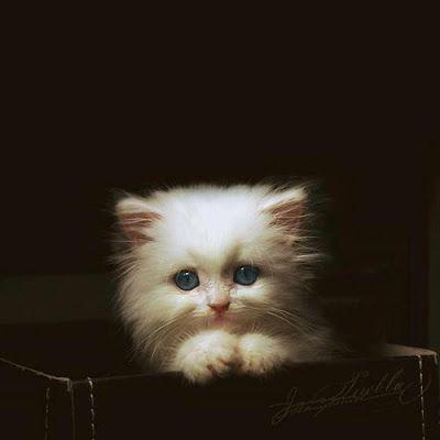 Imágenes de Gatos - Vol.6 (20 Fotos)