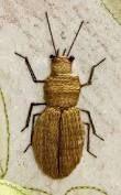 Image result for goldwork beetles how to make