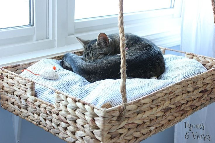 DIY Hanging Basket Cat Perch :: Hometalk