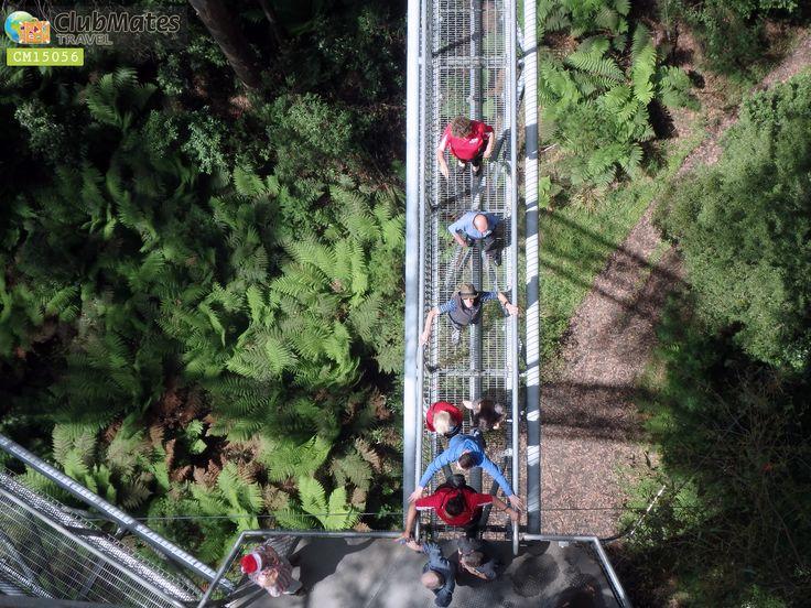 Clubmates Members @ Otway Fly Tree Top Walk