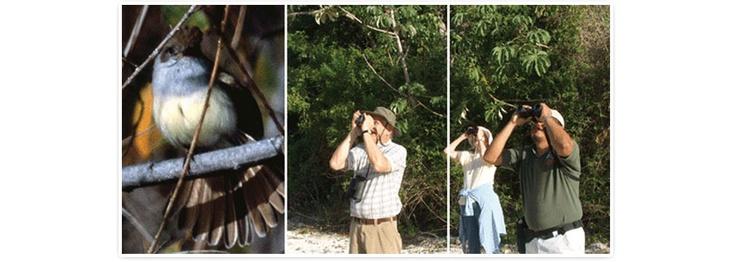 Atractivos Turisticos Observación de Aves  - Observación de Aves: Se han descubierto diversas especies de aves por lo que para los amantes de la naturaleza y conocerdores del tema nuestros bosques los esperan impacientes. www.lacasonamexico.com