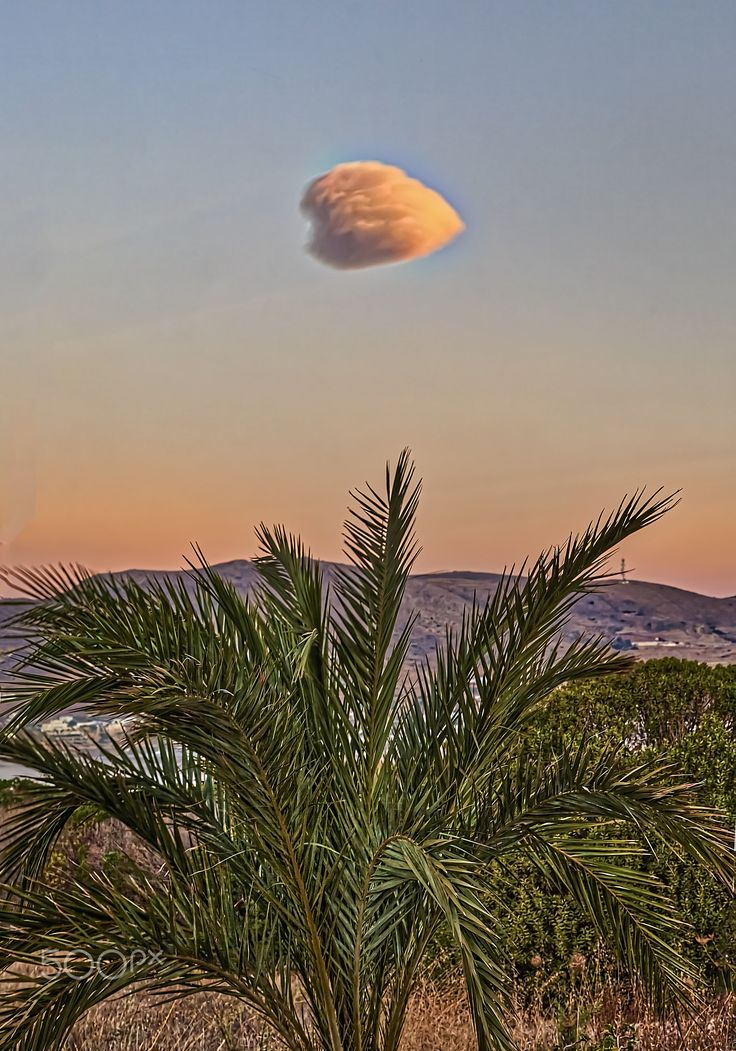 Single Cloud - Single cloud looking like cotton wool over palm tree at sunrise.