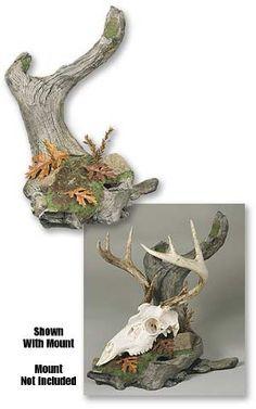 European Skull Mount, European Deer Mount, Deer Skull Mount