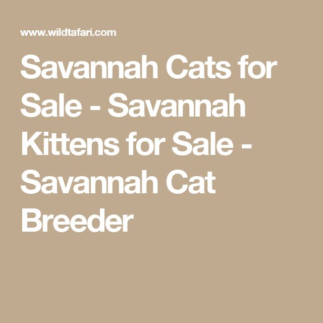 Savannah Cats for Sale - Savannah Kittens for Sale - Savannah Cat Breeder