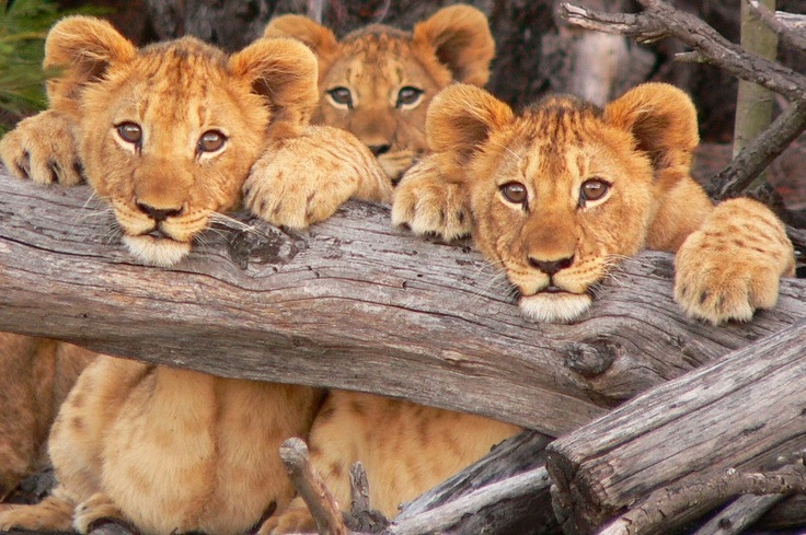 Lalibela Game Reserve **** - Grahamstown - Eastern Cape - South Africa