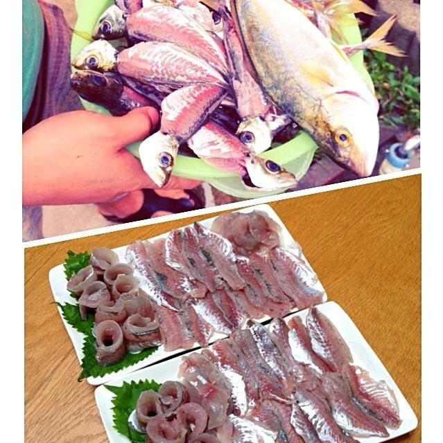 夜中から朝方釣りに行き、鯵、ヒラマサの子どもが釣れました(^ ^)かなりの大漁で、捌くの大変でしたが旦那と頑張りました。お盆で親戚が集まっていたので皆で美味しく頂きました(^ ^) なめろうと骨煎餅もまた作りました(^ ^) - 120件のもぐもぐ - 釣りたて鯵とヒラマサのお造り○2014.8.13○ by mitu1128