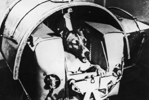 There are dozens of dead animals in space. Find out why and what they contributed to space travel.