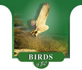 The Birds of British Columbia, Canada. A BC Bird Watching Guide