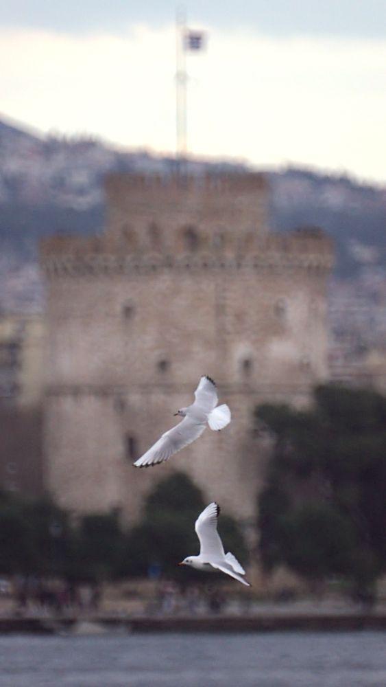 Γλάροι και Πύργος