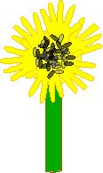 Sunflower Craft - Enchanted Learning Software