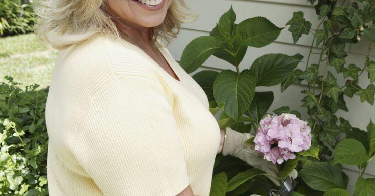 Como pintar hortênsias usando tinta acrílica. Hortênsias são plantas grandes, com folhas largas e que florescem muito. A cor das flores nas hortênsias frequentemente depende da acidez do solo. Na verdade, a cor das flores pode mudar ao longo do ano na medida em que o PH do solo onde foi plantada muda. Flores de hortênsia podem ser cor-de-rosa, roxas, brancas ou apresentar uma combinação ...