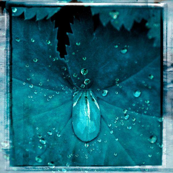 Water Drops Blue