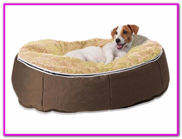 Petfusion Dog Bed Australia Petfusion Ultimate Pet Bed Lounge Prem Edition In Solid Memory Foam Petfusion Petfusionra Dog Lounge Dog Bed Beds Australia