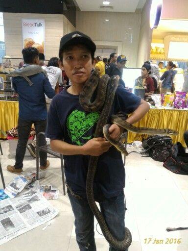 my snake