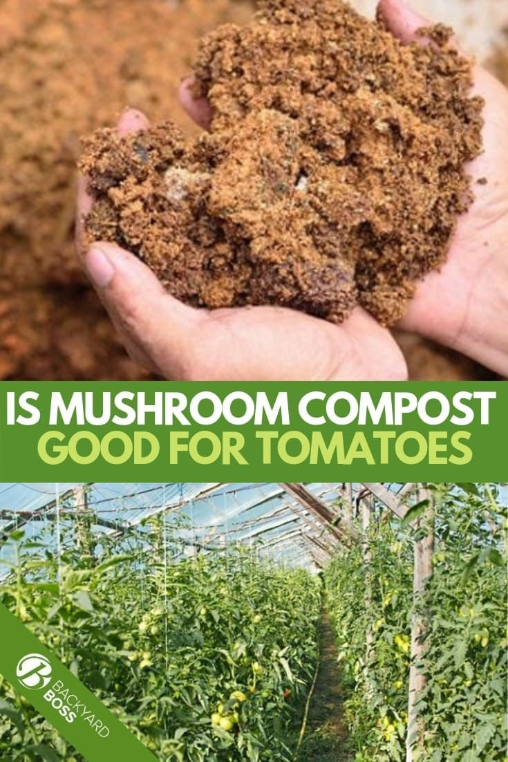 66e47d30825bb3a1322c60b1aaaea5d4 - Is Composted Manure Safe For Vegetable Gardens