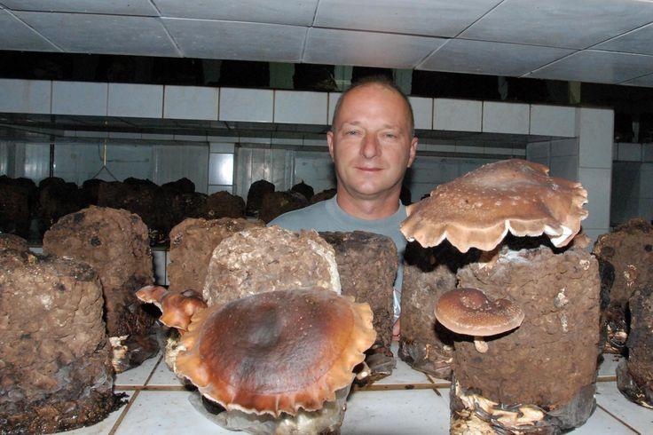 Gyöngyösi Sándor biogazda és óriás shiitake gombái!