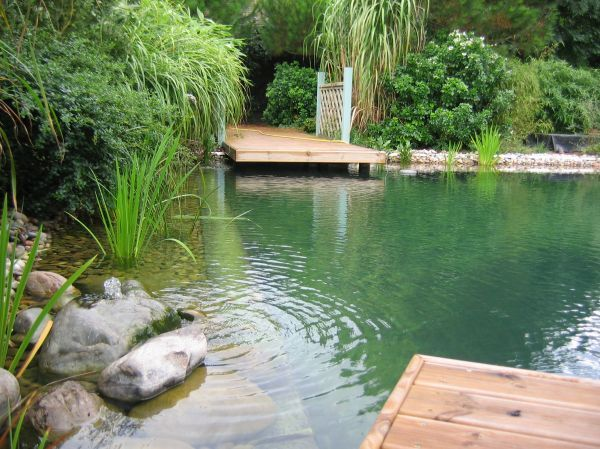 209 best Natural Pool & Pond Designs images on Pinterest