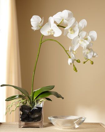 perhaps a white orchid in a vase as the center piece.  feeling like I need flowers in addition to little plants