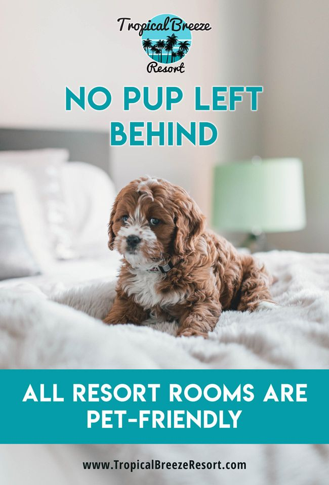 Guide To Vacationing Siesta Key With Pets Pet Friendly Holidays Holiday Resort Luxury Beach Resorts