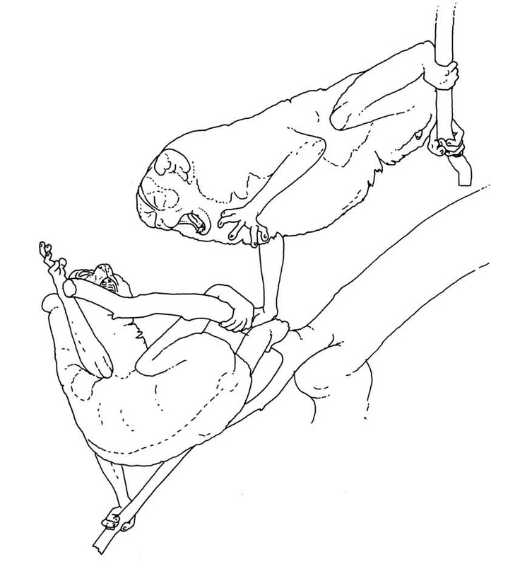 the biology behavior and conservation of the slow loris a species of primates 7 &  2 pridedays& theconceptofprideeventswasdevelopedbytheconservationgrouprare pride,#wherebyafocalspeciesoftheareawouldbeusedtofosterasenseof.