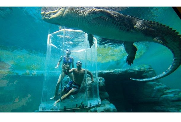 Crocosaurus Cove  Cage of death