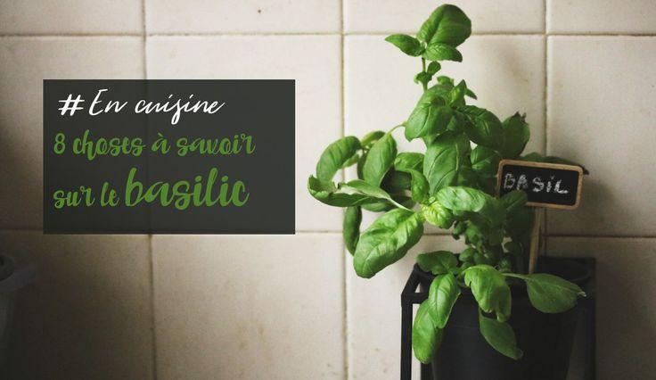 8 choses savoir pour faire pousser du basilic en pot. Black Bedroom Furniture Sets. Home Design Ideas