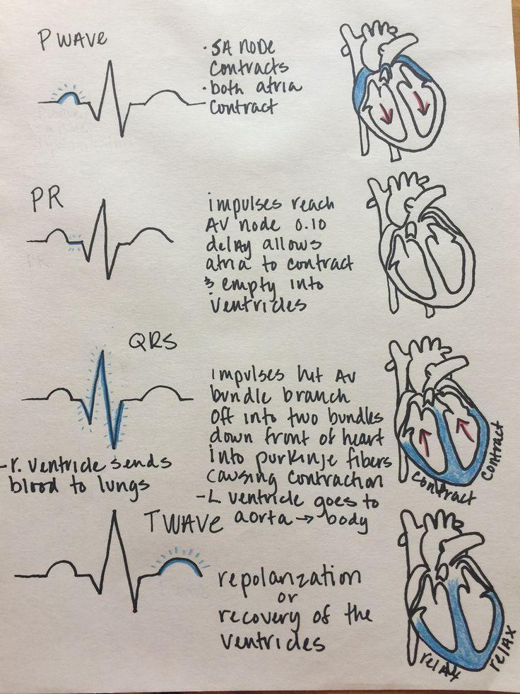 EKG medical assistant