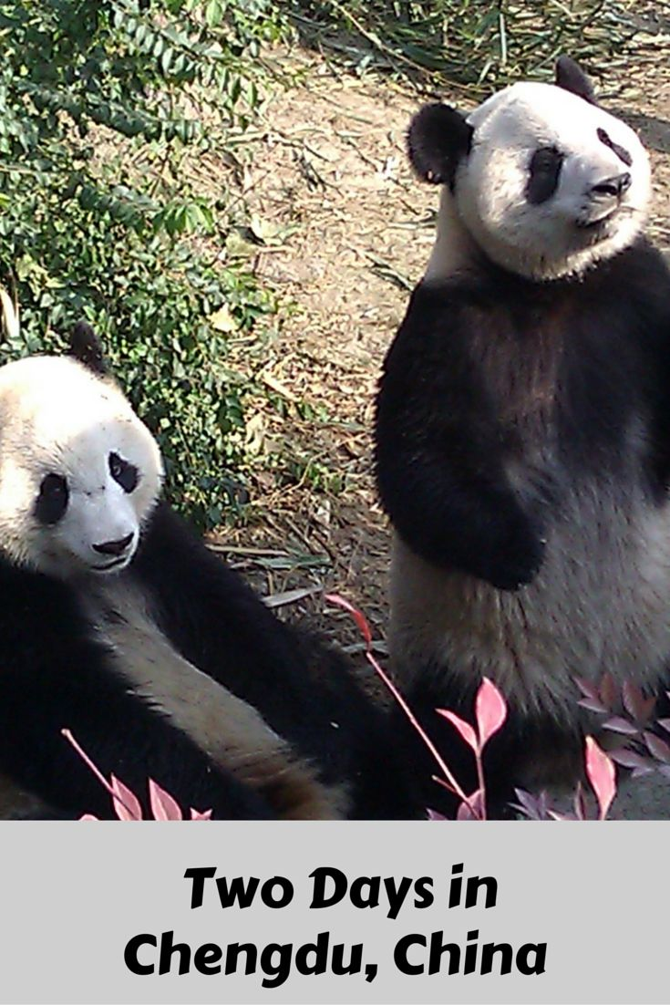 Best things to do with 2 days in Chengdu, China *********************************************Chengdu Things To Do | Chengdu Must See | Chengdu Travel |  Chengdu China | Chengdu Panda |   Chengdu Travel China |  Chengdu Travel Baby Pandas |  China Travel Destinations | China Travel Ideas | China Travel Blog | China Travel Inspiration | #chengdu #china #pandas