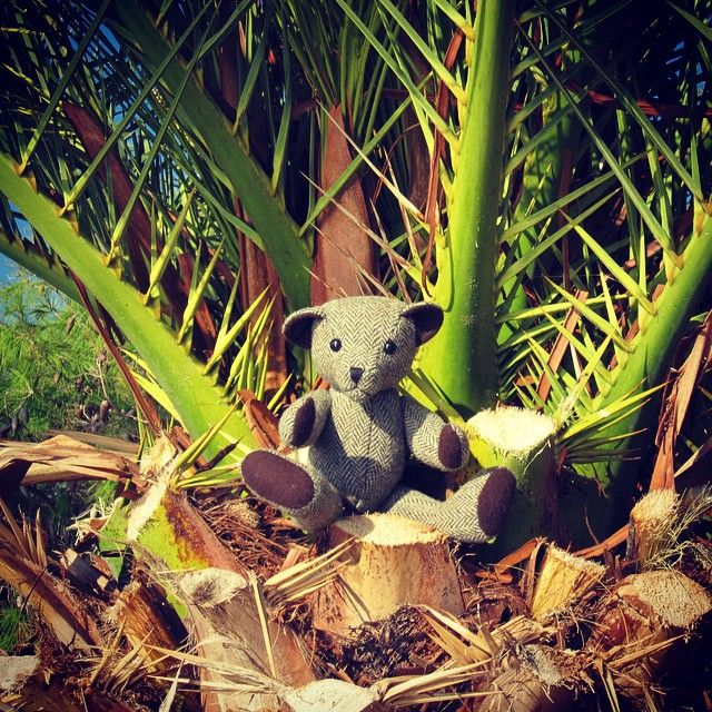Just hanging out in the greenery this fine Sunday morning #tweedyted #greece #LazyTeddybear