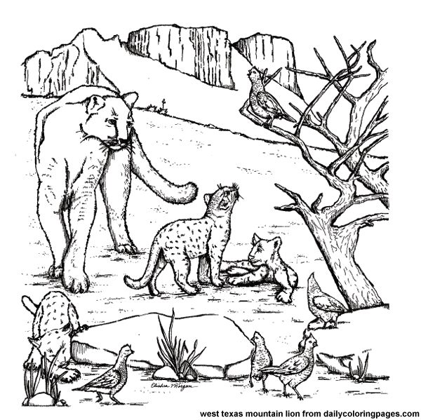 west texas mountain lions on realistic animals coloring pages enjoy coloring - Realistic Wildlife Coloring Pages