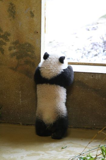 """What's out there?"" pandathings. com                                                                                                                                                                                 More"