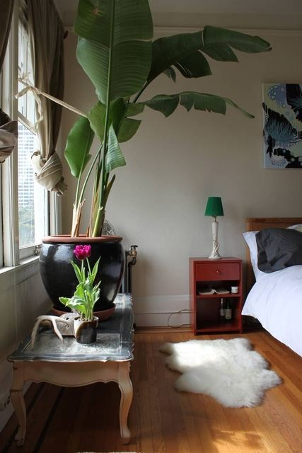 of a big plant in a bedroom maybe not that big but similiar plant