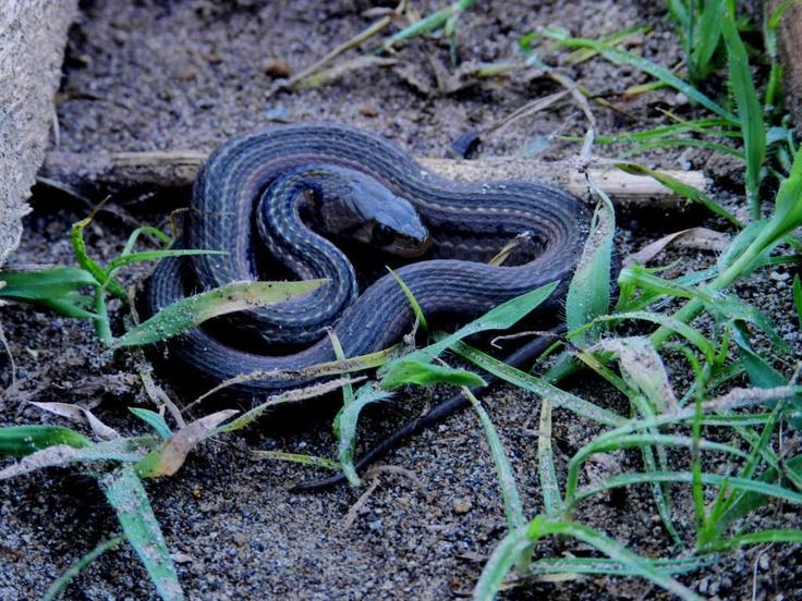 snake ^^
